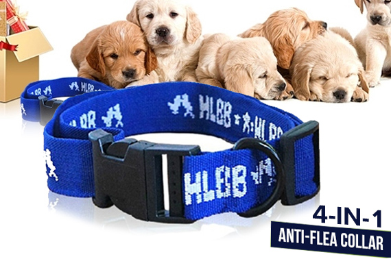 4-in-1 Pet Dog Anti Fleas & Ticks Nylon Collar
