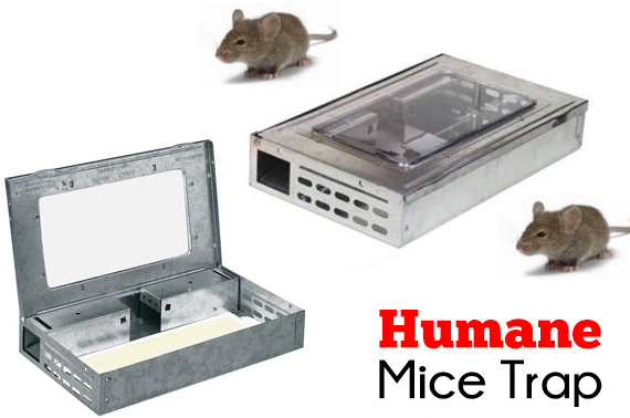 Live Self Catching Humane Mice Metal Trap
